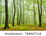 foggy natural forest of oak and ... | Shutterstock . vector #768467116