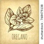 oregano ink sketch on old paper ... | Shutterstock .eps vector #768475138
