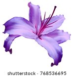 violet   flower  lily on white... | Shutterstock . vector #768536695