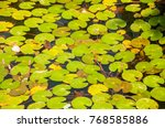 Seamless Pond Texture With Lil...