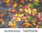 autumn maple leaves texture and ... | Shutterstock . vector #768592636