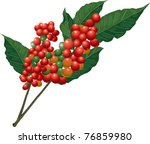 coffee tree branch with beans   Shutterstock .eps vector #76859980