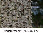 floss silk tree  or called ... | Shutterstock . vector #768602122