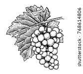 hand drawn grape illustration....   Shutterstock .eps vector #768614806
