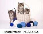 Adorable Kittens With Balls Of...