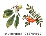 chestnut and mountain ash ... | Shutterstock . vector #768704992