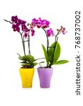 two orchids in pots isolated on ... | Shutterstock . vector #768737002