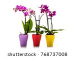 three orchids in pots isolated... | Shutterstock . vector #768737008