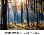 camping and tent under the pine ... | Shutterstock . vector #768748162