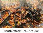 tree roots with fallen autumn... | Shutterstock . vector #768775252