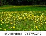 meadow full of yellow flowers    Shutterstock . vector #768791242