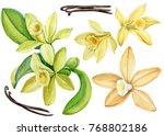 set vanilla flower  watercolor  ... | Shutterstock . vector #768802186