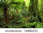 fern tree in tropical jungle... | Shutterstock . vector #76880251