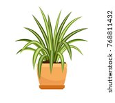 chlorophytum house plant in... | Shutterstock .eps vector #768811432