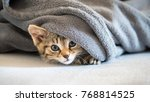 Stock photo cat child is hiding on the sofa under a blanket 768814525