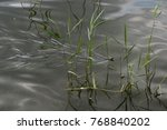 Small photo of Grass snake slither in water