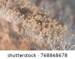 aspergillus  mold  under the... | Shutterstock . vector #768868678