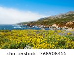 beautiful summer coastal... | Shutterstock . vector #768908455