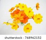 beautiful yellow flower vase... | Shutterstock . vector #768962152