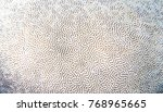 White coral texture. Tropical seashore underwater photo. Coral reef animal. Sea shore coral closeup. Natural surface closeup. Undersea view of marine life. Coral reef texture. Shallow water snorkeling