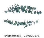 decorative eucalyptus leaves... | Shutterstock . vector #769020178