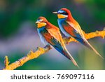 pair of exotic birds at sunset | Shutterstock . vector #769097116