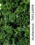 fresh raw green kale packed in... | Shutterstock . vector #769116898