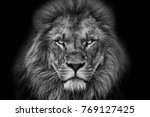 Lion Portrait Black And White...