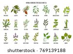 collection of natural herbs for ... | Shutterstock .eps vector #769139188