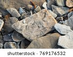 fossilized stone at world... | Shutterstock . vector #769176532