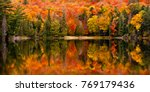 fall colour reflected in the... | Shutterstock . vector #769179436