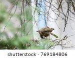 Sparrow Hawk Sitting On Fence...