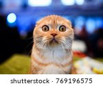Cute Shocked Cat  Surprised...