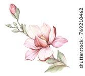 image of blooming magnolia...   Shutterstock . vector #769210462