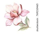 image of blooming magnolia...   Shutterstock . vector #769210465
