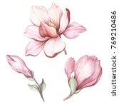 set of blooming magnolia. hand... | Shutterstock . vector #769210486