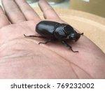coconut rhinoceros beetle ... | Shutterstock . vector #769232002