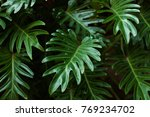 green color in socal autumn.... | Shutterstock . vector #769234702
