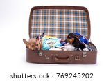 Russian Toy Terrier And...