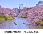 cherry blossoms at... | Shutterstock . vector #769332556