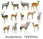Antelope Collection Isolated On ...