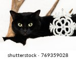 black cat on white with... | Shutterstock . vector #769359028