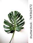 monstera leaves. exotic plant... | Shutterstock . vector #769362472