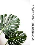 monstera leaves. exotic plant... | Shutterstock . vector #769362478