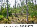 goose creek state park | Shutterstock . vector #769363072