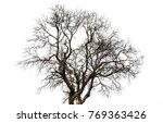 dead tree isolated  on white... | Shutterstock . vector #769363426