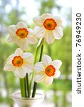 Four White Daffodils In A Vase...