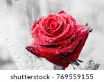 Closeup Beautiful Red Rose Or...