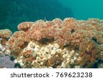colony of sea anemones under... | Shutterstock . vector #769623238