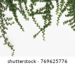 Green Creeper Plant On A White...
